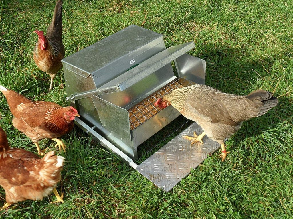 grandpas chicken feeder feeding chickens