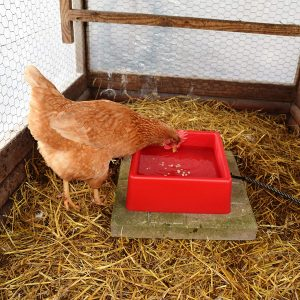 Heated poultry bowl