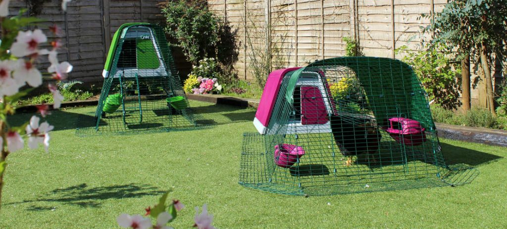 Omlet chicken coop for 4 chickens