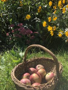 organic apples for chickens