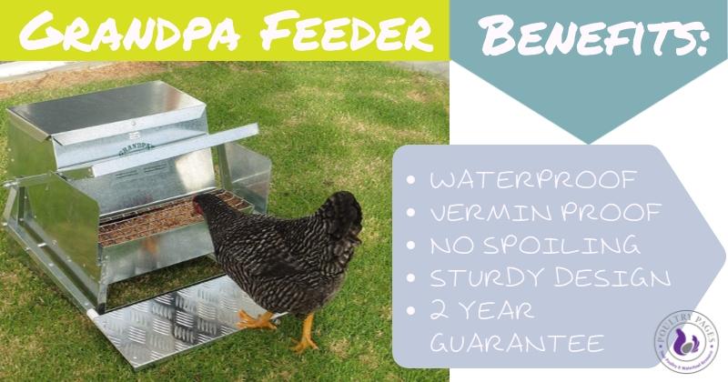 benefits of grandpa treadle chicken feeders