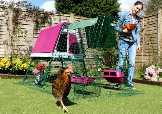 eglu go up portable chicken coop